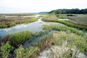 Saltmarsh in Timucuan Ecological and Historical Reserve.  Photo credit: National Park Service