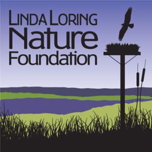 Linda-Loring-for-web
